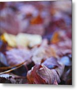 Fallen Leaves Road Metal Print by Irina Wardas
