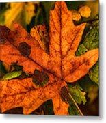 Fallen Maple Leave Metal Print