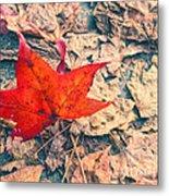Fallen Red Leaf Metal Print