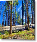 Fallen Sequoia In Mariposa Grove In Yosemite National Park-california Metal Print