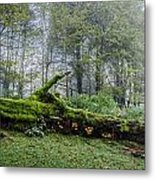 Fallen Stump Metal Print