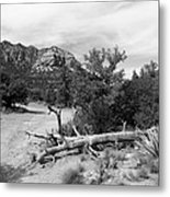 Fallen Tree Metal Print
