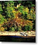 Fallen Tree On The Shore Metal Print