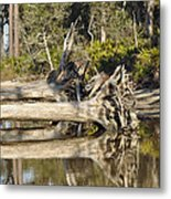 Fallen Trees Reflected In A Beach Tidal Pool Metal Print