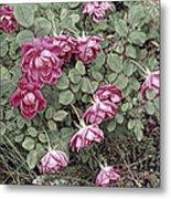 Fallin' Roses Metal Print