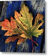 Falling For Colour Metal Print