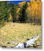 Falling In Flagstaff Metal Print