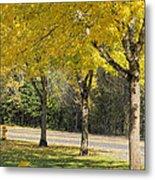 Falling Leaves From Neighborhood Beech Trees Metal Print
