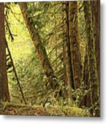 Falling Trees In The Rainforest Metal Print