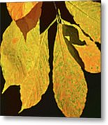 Fall's Purest Gold Metal Print