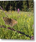 False Heath Fritillary In Meadow Bavaria Metal Print