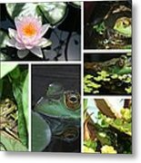 Family Of Frogs Collage Metal Print