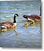 Family Of Geese Out For A Swim Metal Print