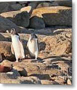 Family Of Nz Yellow-eyed Penguin Or Hoiho On Shore Metal Print