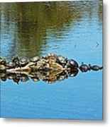 Family Of Turtles Metal Print