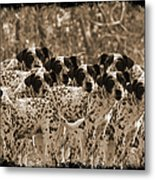 Family Portrait Before The Hunt-featured Picture In Large Dogs Only Group Metal Print