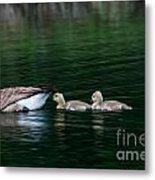 Family Swim Metal Print