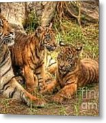 Tiger Family Metal Print