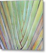 Fan Palm Abstract 2 Metal Print