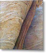 Fan Palm Forced Into A Slant By Rock In Andreas Canyon-ca Metal Print