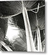Fan Palm Metal Print by Lisa Cortez
