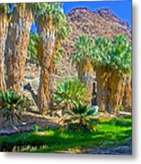Fan Palms By The Creek In Lower Palm Canyon In Indian Canyons Near Palm Springs-california Metal Print