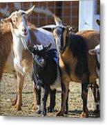 Fancy Goats Metal Print