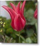 Spiky Tulip Metal Print