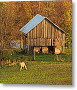 Farm At Sunrise Metal Print