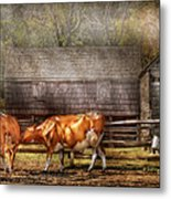 Farm - Cow - A Couple Of Cows Metal Print by Mike Savad
