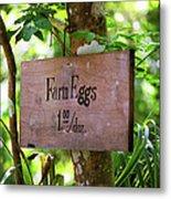 Farm Eggs Metal Print