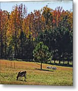 Farm Journal - Grazing Metal Print
