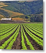 Farm Lands Of The Central Coast By Diana Sainz Metal Print