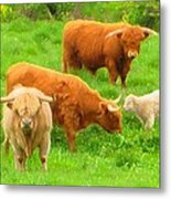 Farm - Pasture - Meadow Metal Print