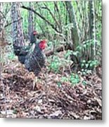 Farmyard Life With The Hens Metal Print
