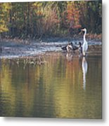Fast Feathered Friends Metal Print