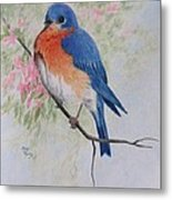 Fat And Fluffy Bluebird Metal Print
