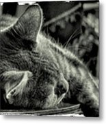 Fatigued Feline Metal Print