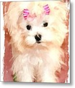 Faux Maltese Bella Metal Print