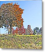 Favoring The Fall Colors Metal Print