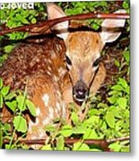 Fawn In The Forest - Inspirational - Religious Metal Print