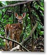 Fawn In The Woods Metal Print