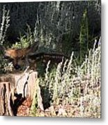 Fawn Front Yard Divide Co Metal Print