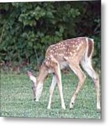 Fawn Meadow Metal Print