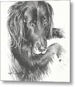 Black Dog Laying Pencil Portrait Metal Print