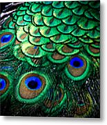 Feather Abstract Metal Print