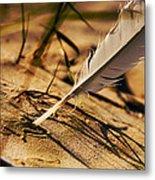 Feather And Sand Metal Print by Raimond Klavins