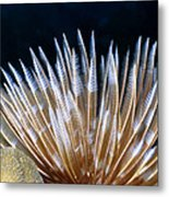Feather Duster Worms 4 Metal Print