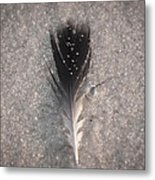 Feather In The Wind  Metal Print