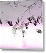 Feather Light Metal Print